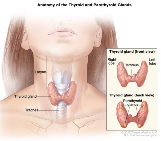 thyroid-disease-1.jpg